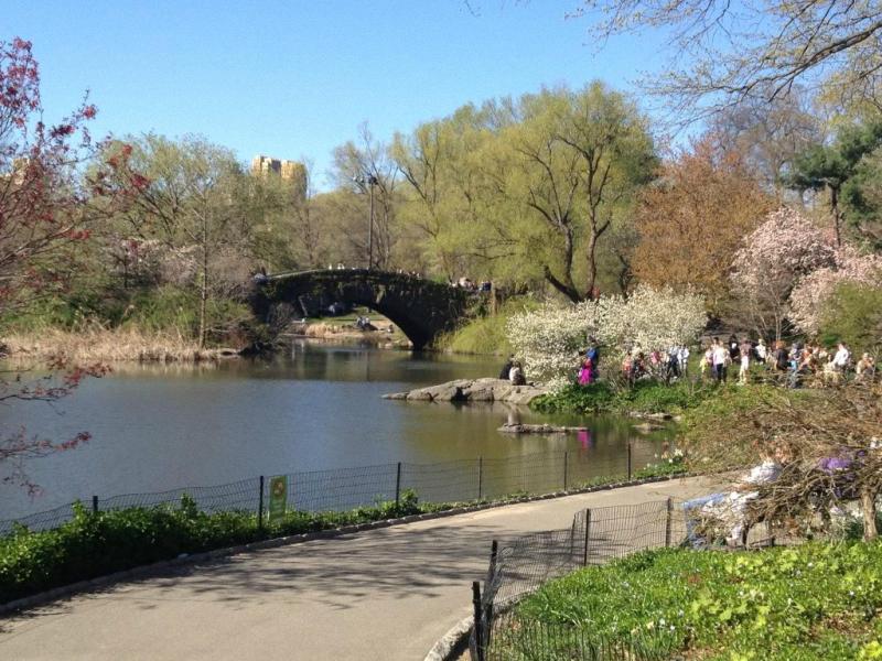 Весна в центральном парке Нью-Йорка (4)