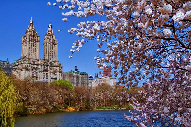 Весна в центральном парке Нью-Йорка (9)