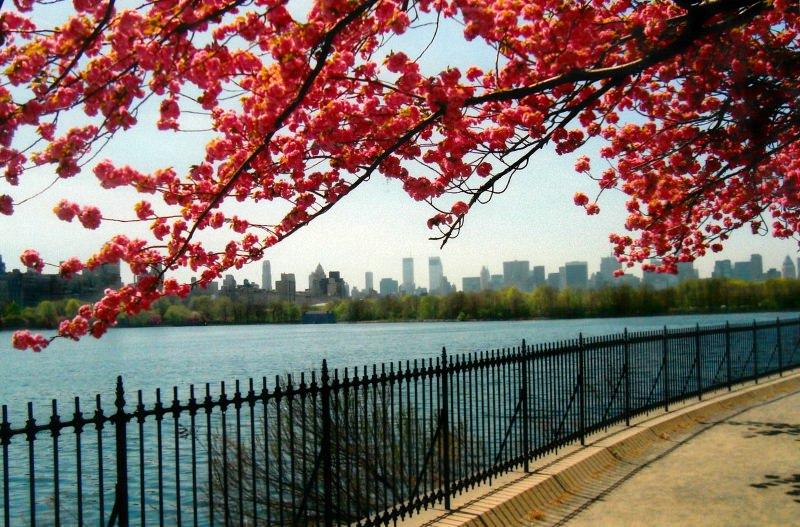 Весна в центральном парке Нью-Йорка (8)