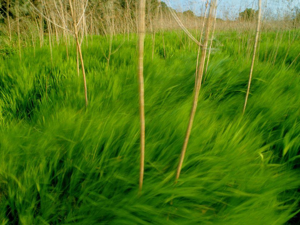 Зеленый цвет жизни (4)