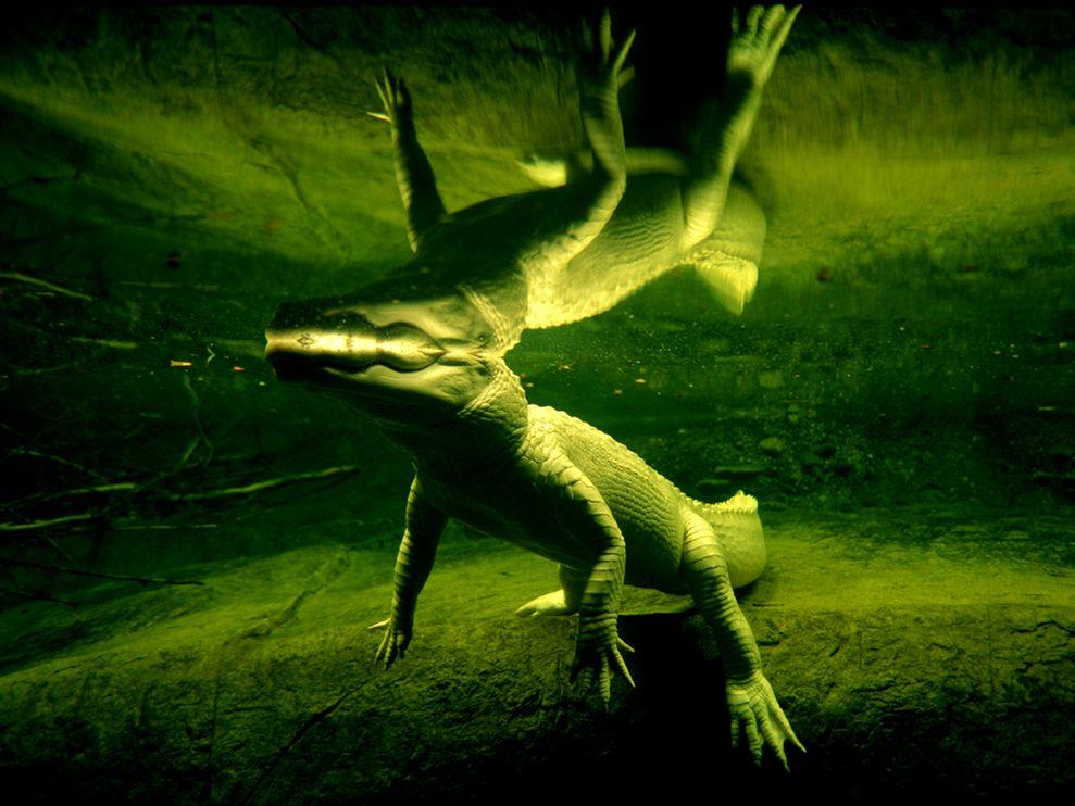Зеленый цвет жизни (3)
