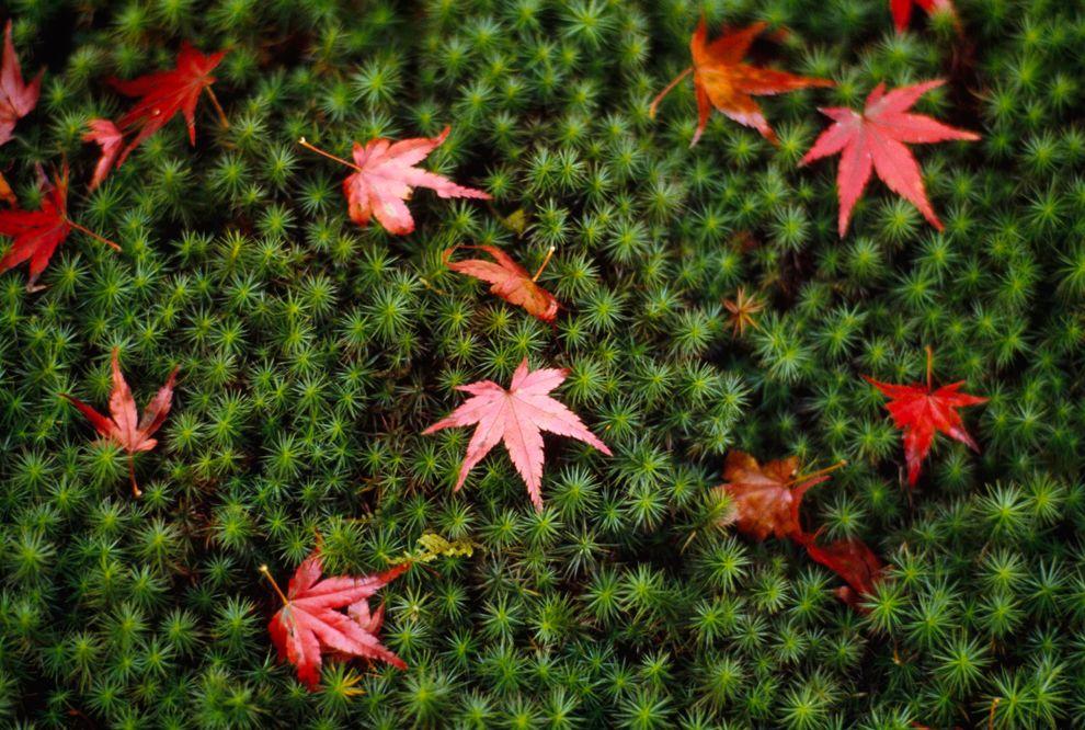Зеленый цвет жизни (11)