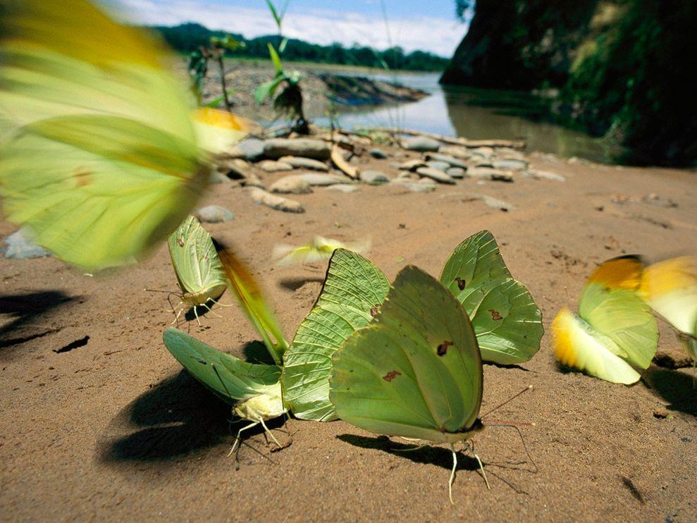 Зеленый цвет жизни (7)