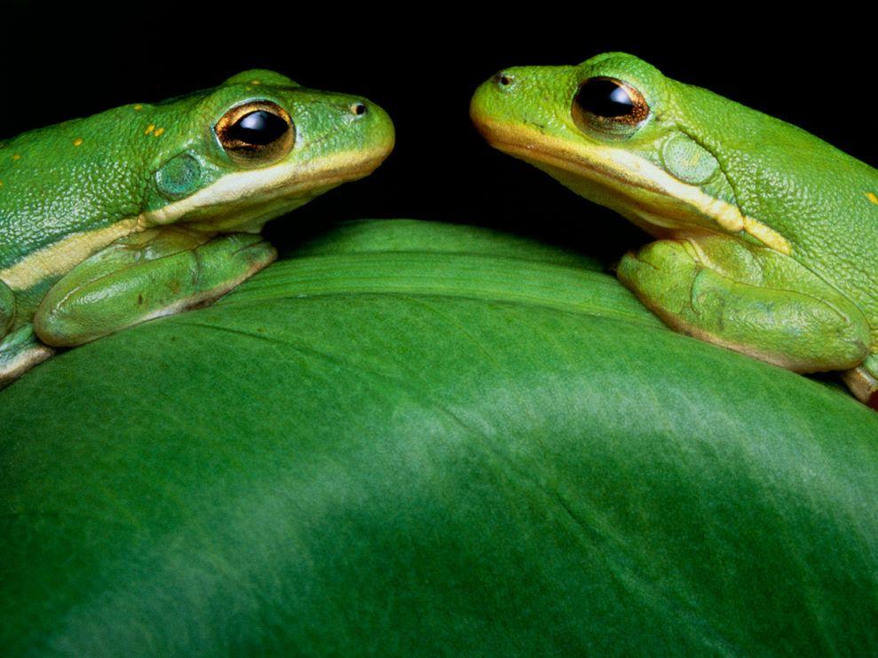 Зеленый цвет жизни (5)
