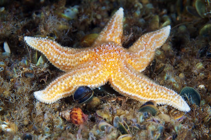 obitateli-podvodnoho-mira (37)