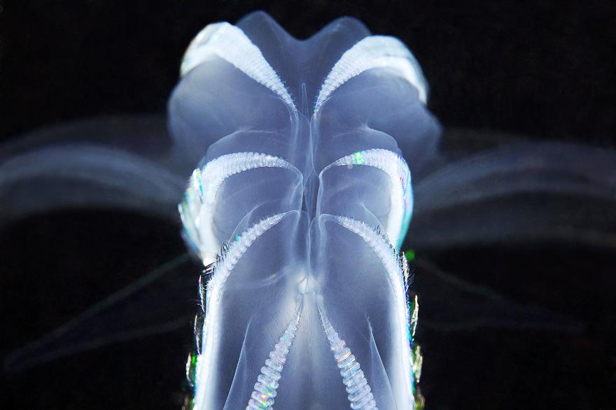 obitateli-podvodnoho-mira (26)