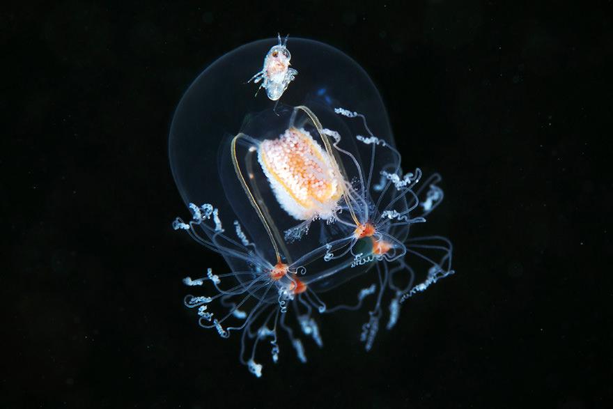 obitateli-podvodnoho-mira (25)