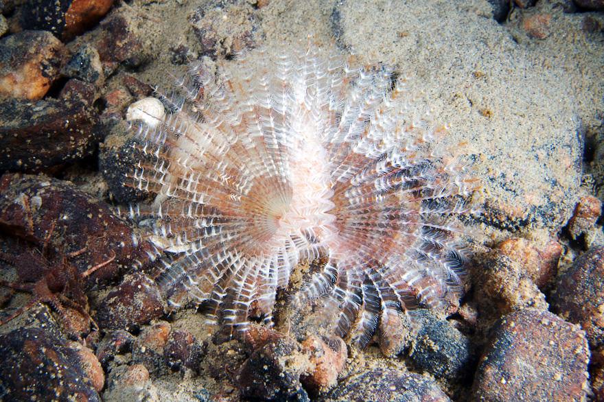 obitateli-podvodnoho-mira (24)