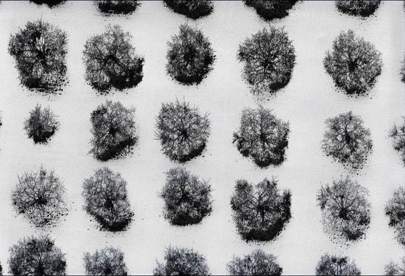Воздушные фотографии сельскохозяйственных угодий (13)