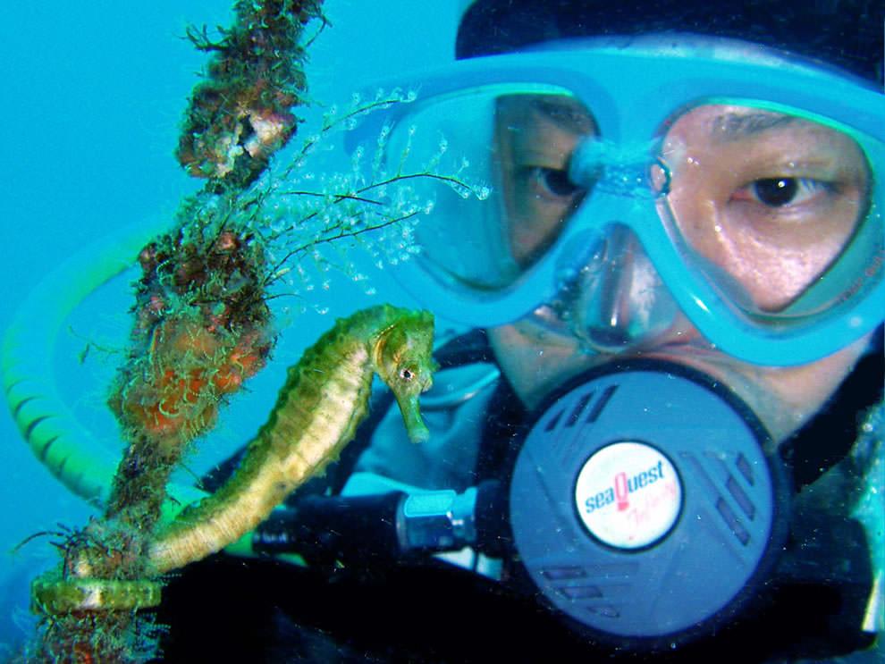 Морской конек (36)
