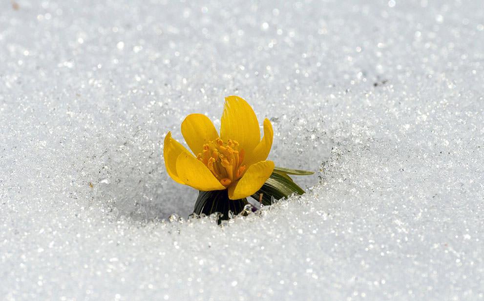 Признаки весны (7)