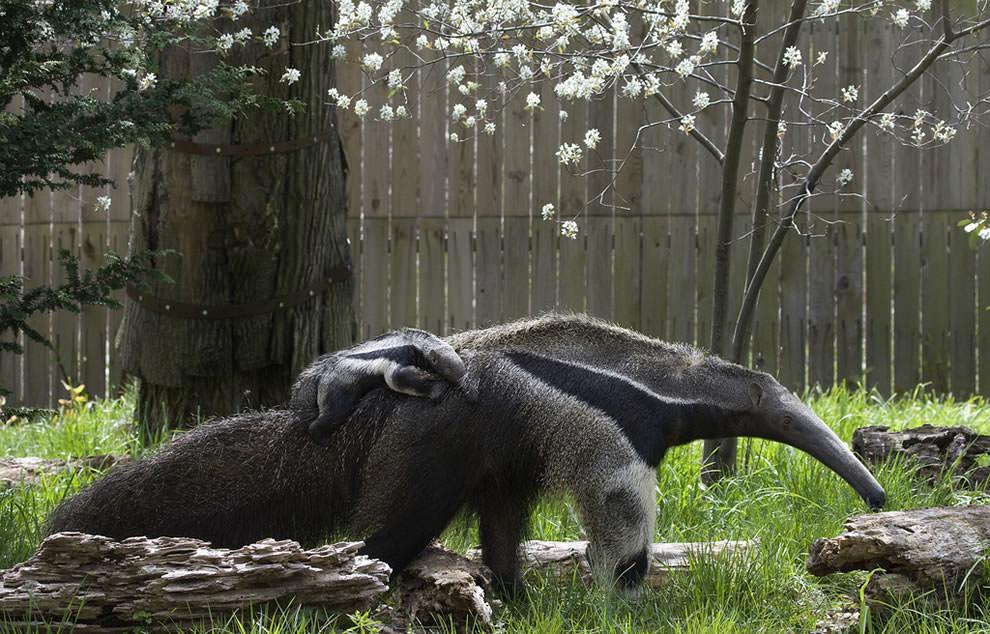 День Матери - фото из мира животных (11)
