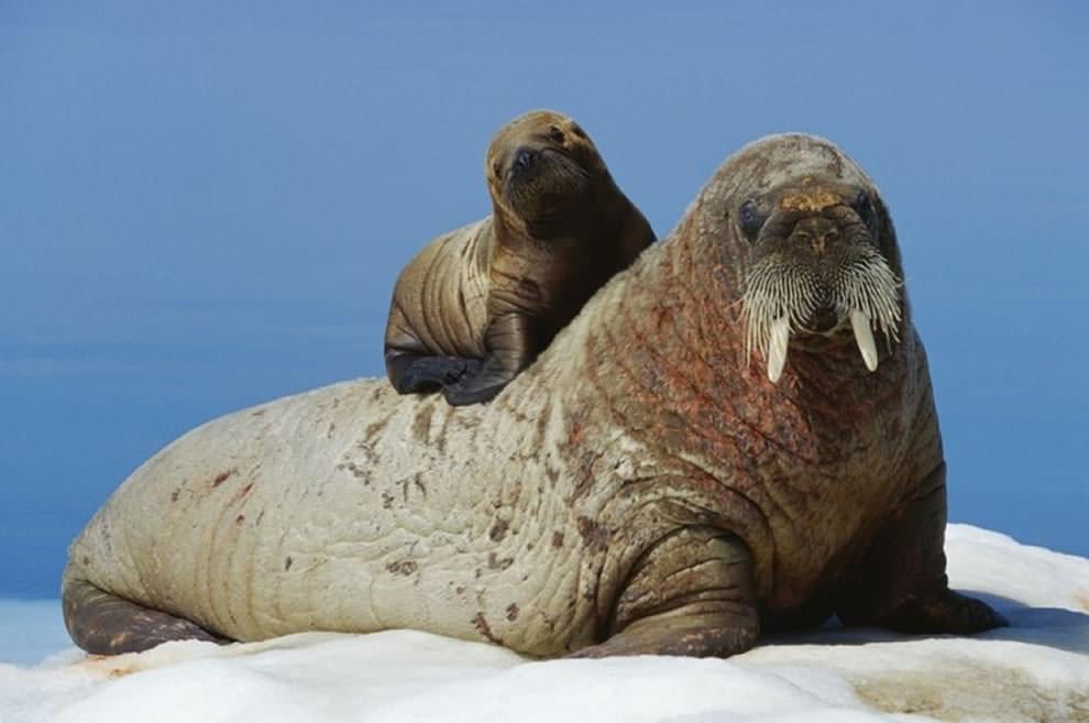 День Матери - фото из мира животных (12)