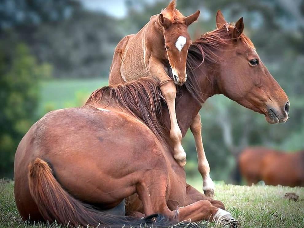 День Матери - фото из мира животных (13)