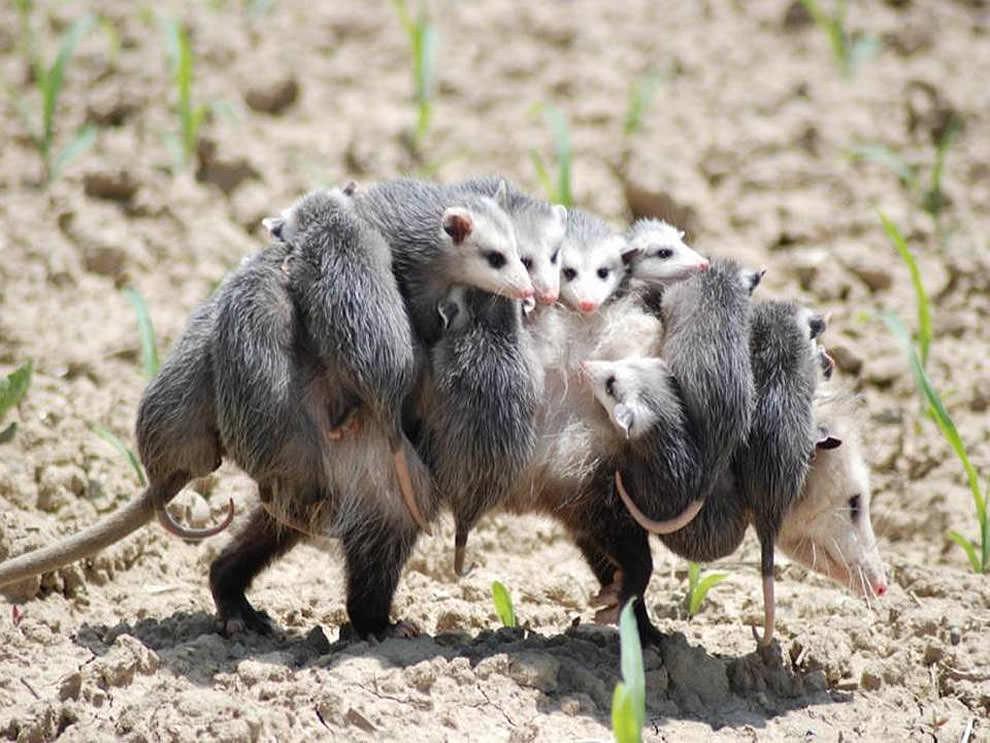День Матери - фото из мира животных (14)
