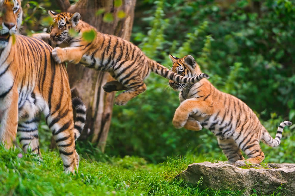 День Матери - фото из мира животных (15)