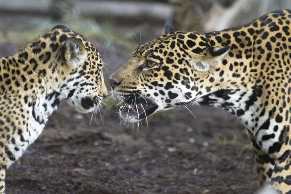 День Матери - фото из мира животных (17)