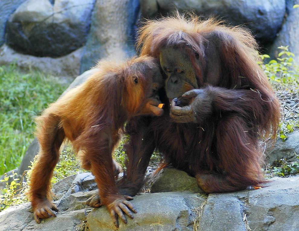 День Матери - фото из мира животных (19)