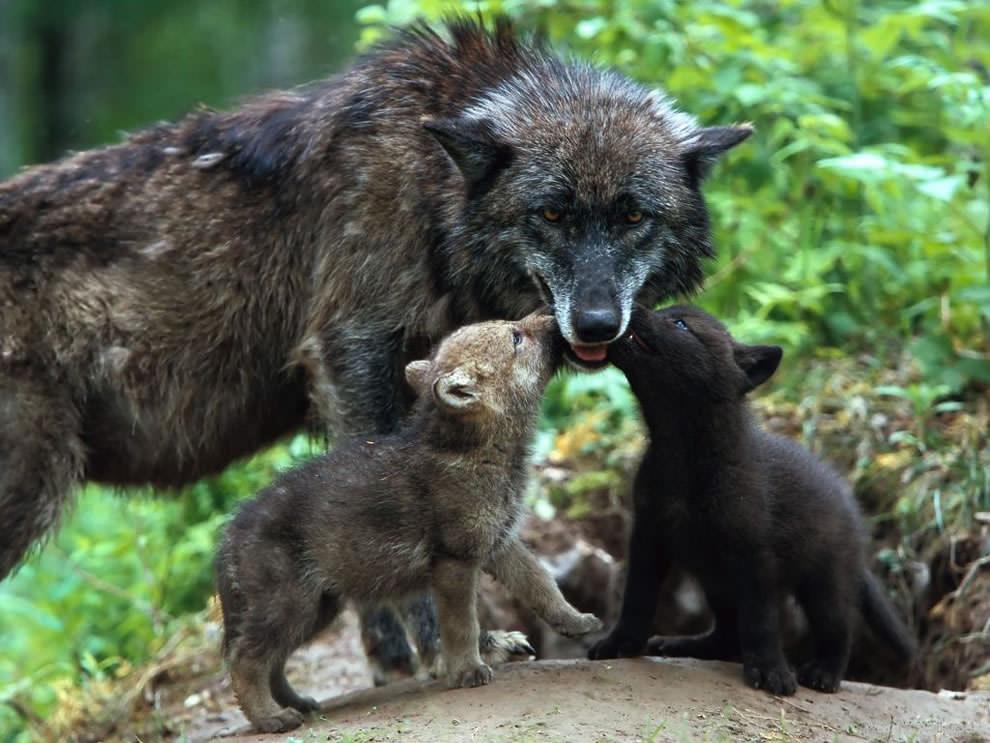 День Матери - фото из мира животных (20)