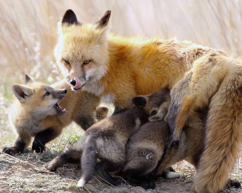 День Матери - фото из мира животных (21)