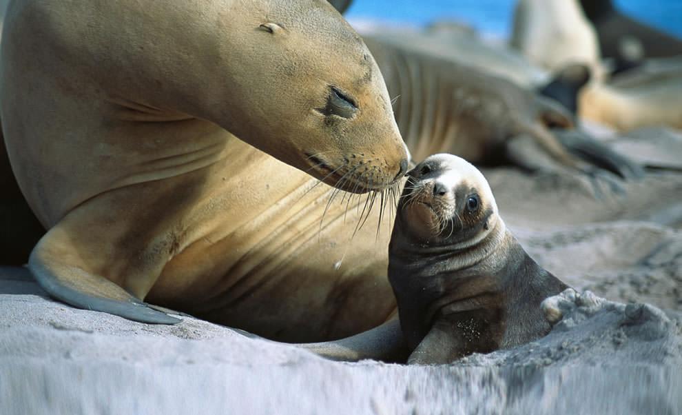 День Матери - фото из мира животных (22)