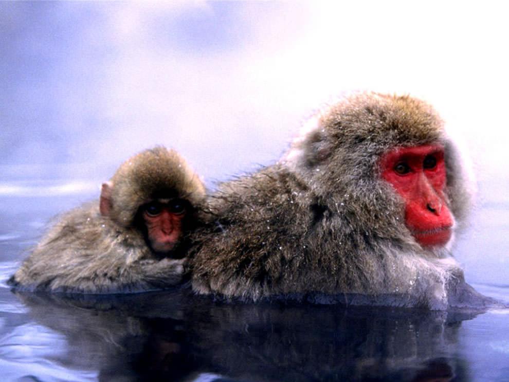 День Матери - фото из мира животных (24)
