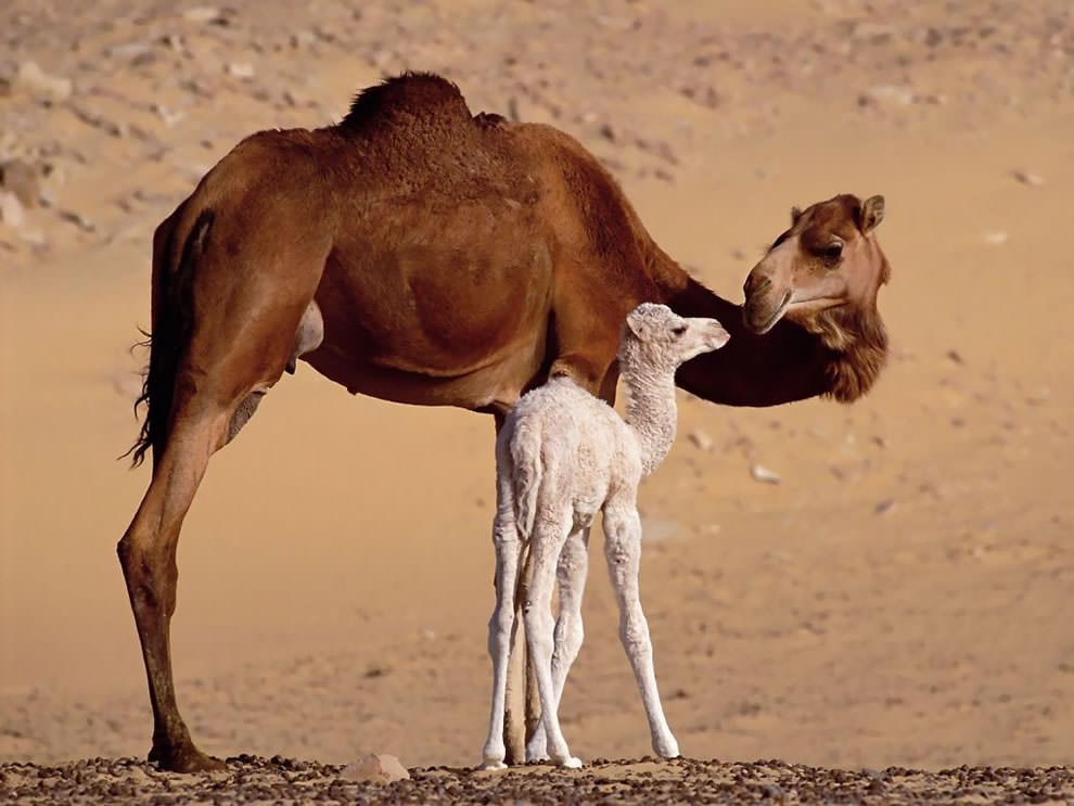 День Матери - фото из мира животных (25)