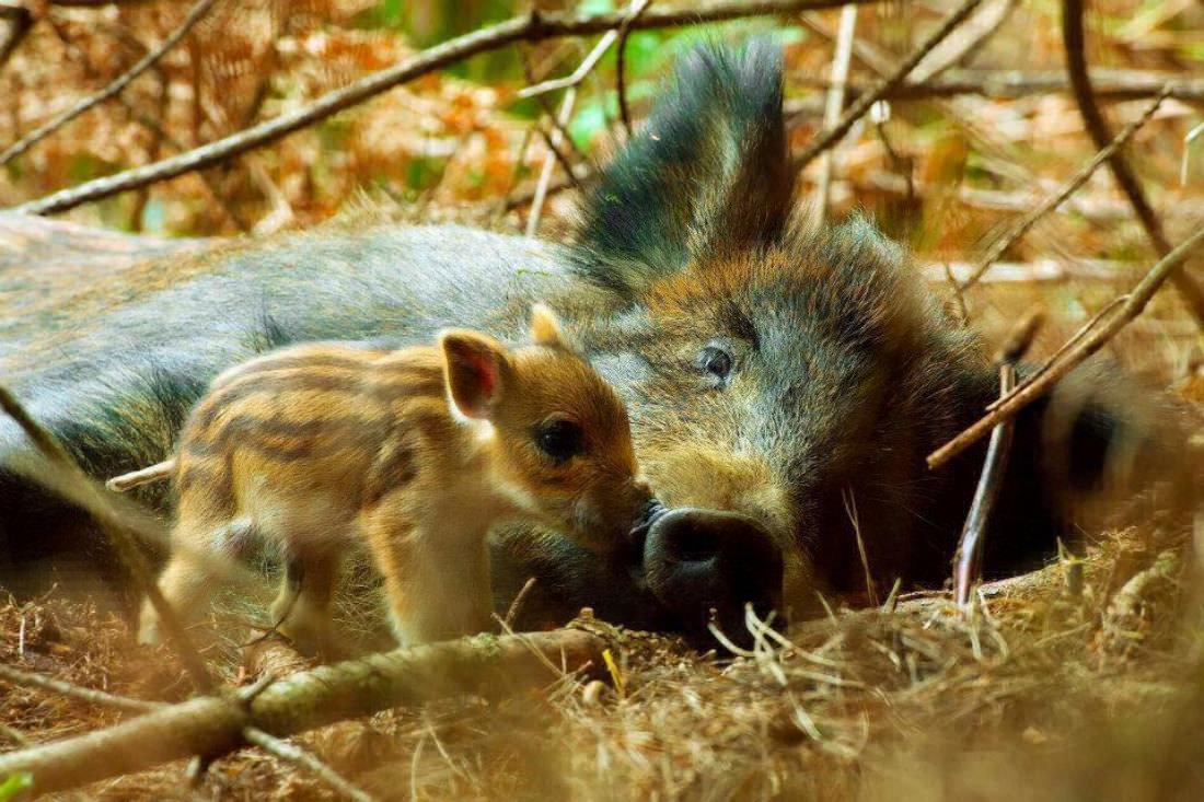 День Матери - фото из мира животных (27)