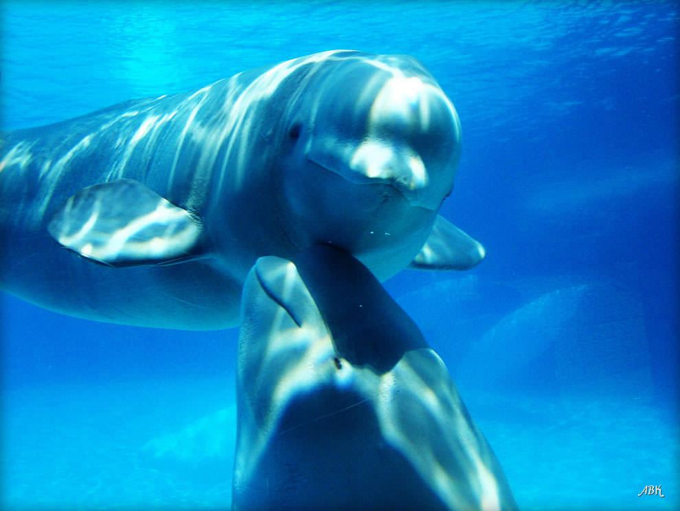 День Матери - фото из мира животных (28)