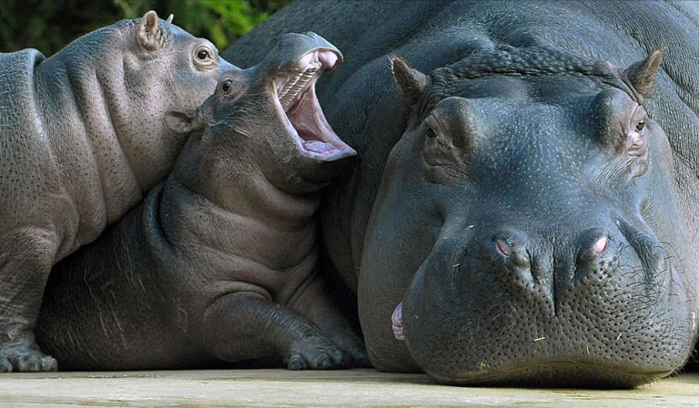 День Матери - фото из мира животных (2)
