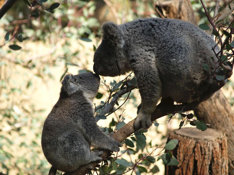 День Матери - фото из мира животных (30)