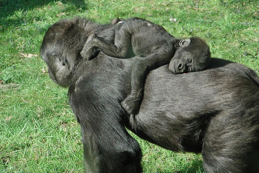 День Матери - фото из мира животных (31)