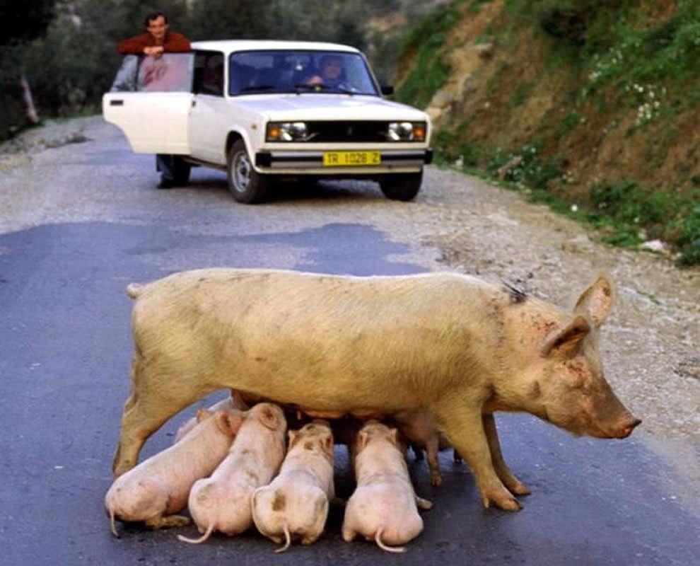 День Матери - фото из мира животных (32)