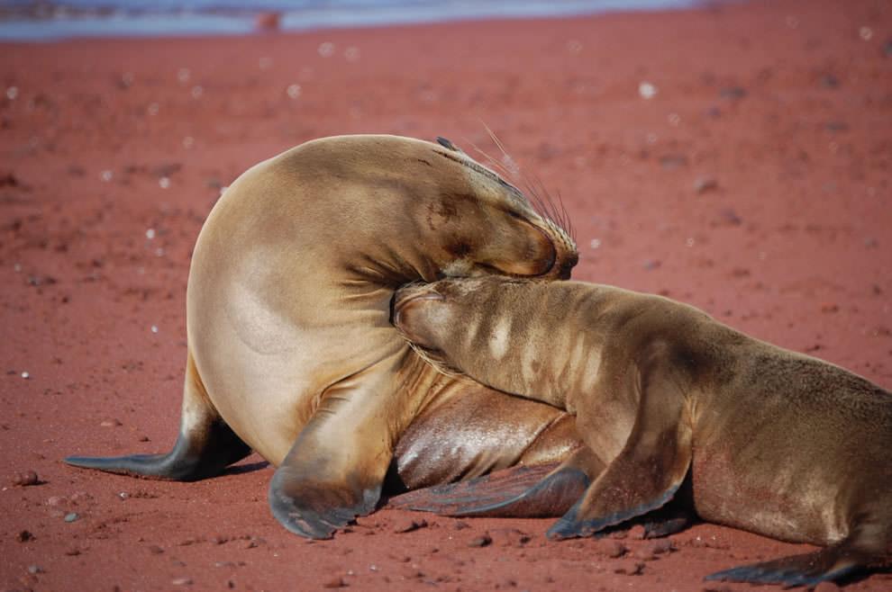 День Матери - фото из мира животных (33)