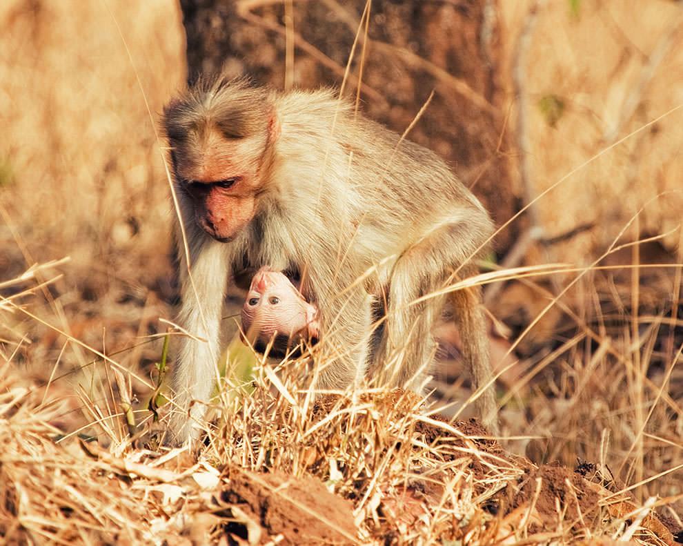 День Матери - фото из мира животных (36)