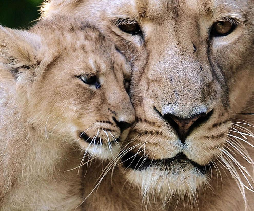 День Матери - фото из мира животных (37)