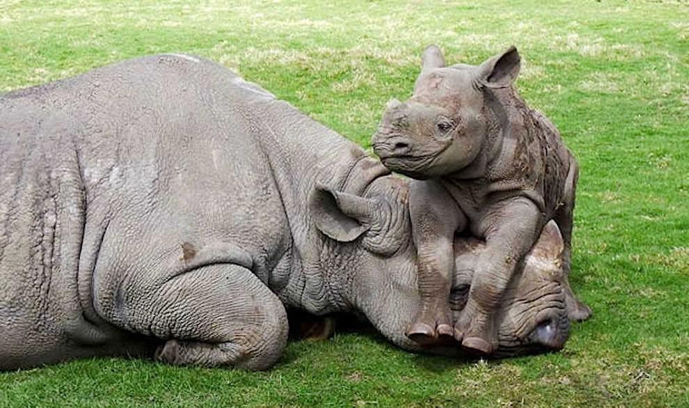 День Матери - фото из мира животных (39)
