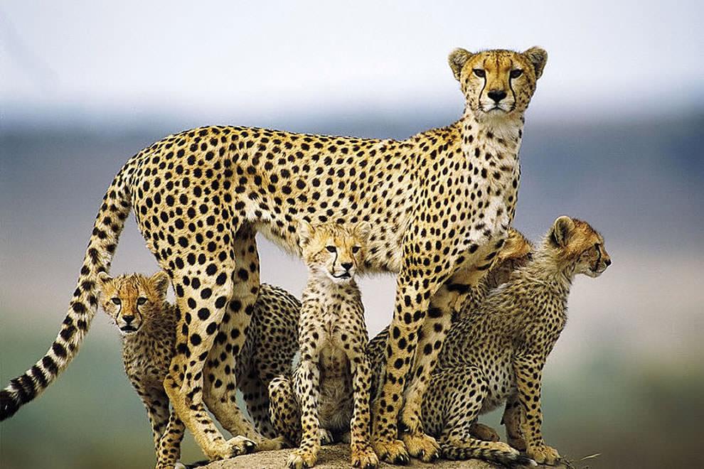 День Матери - фото из мира животных (3)