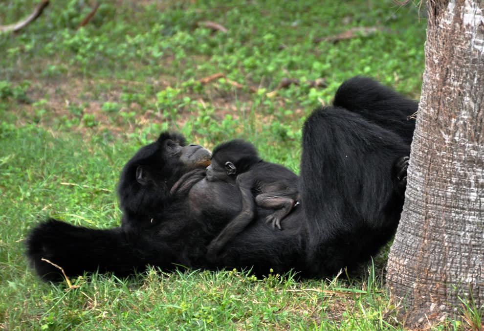 День Матери - фото из мира животных (40)