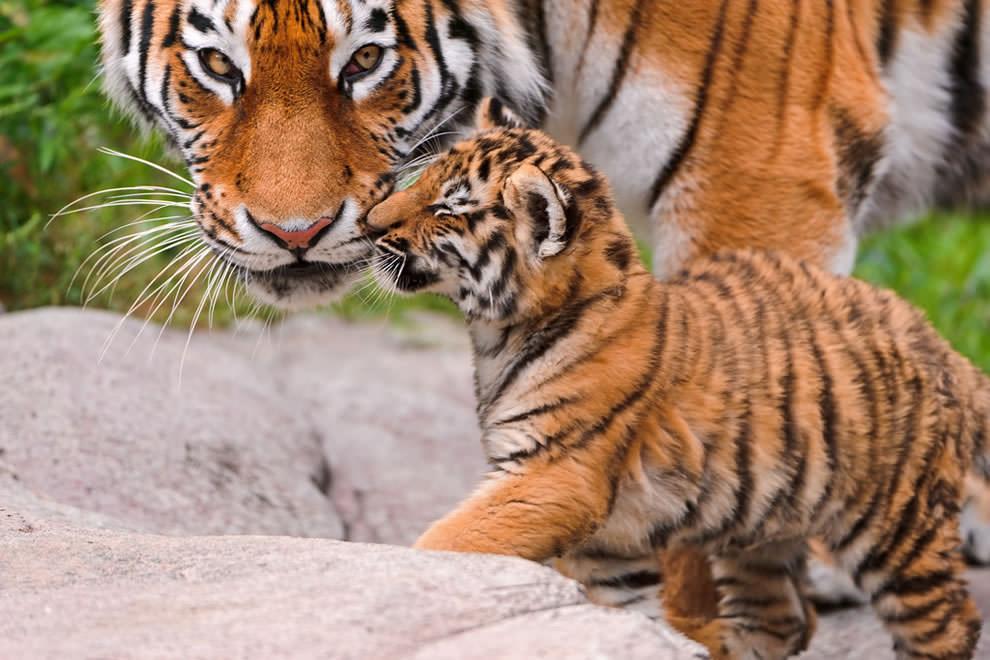 День Матери - фото из мира животных (41)