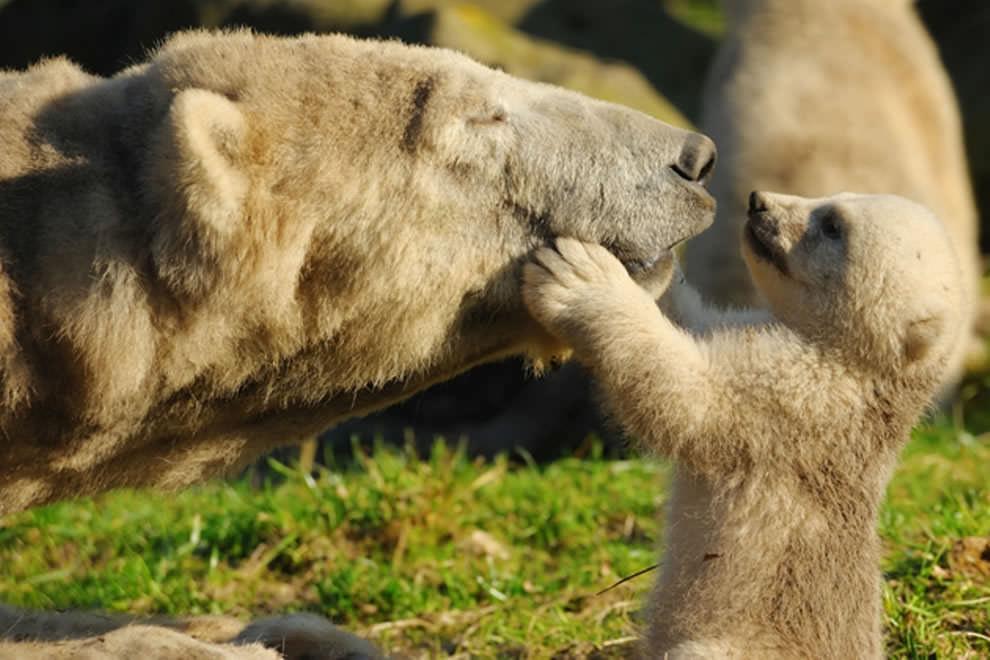 День Матери - фото из мира животных (42)
