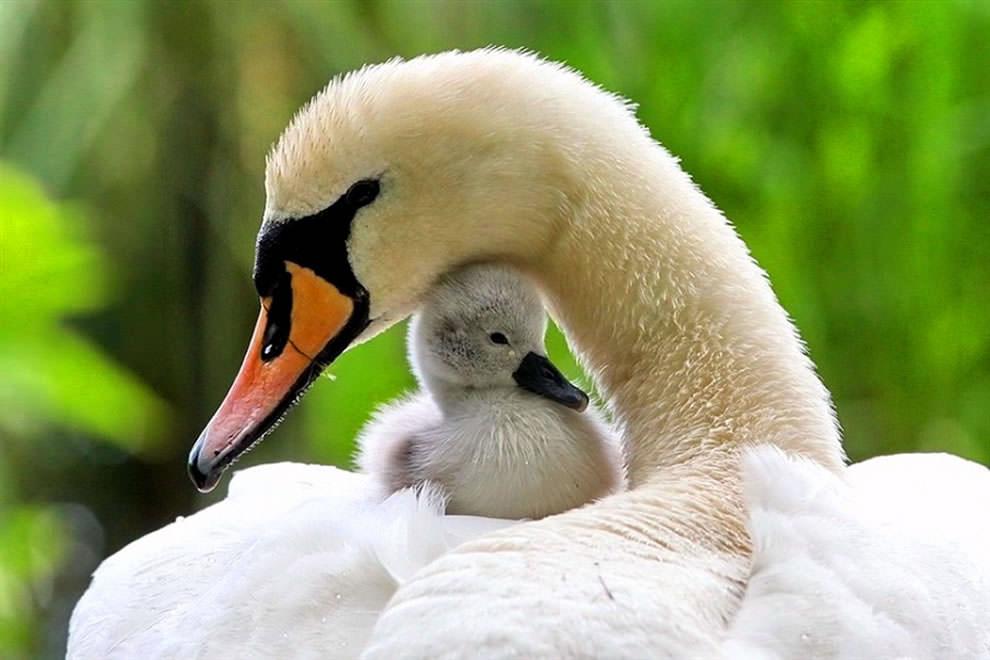 День Матери - фото из мира животных (43)
