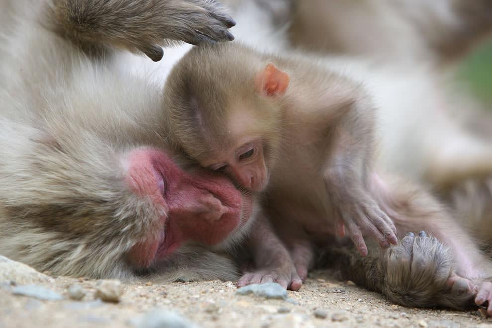 День Матери - фото из мира животных (45)