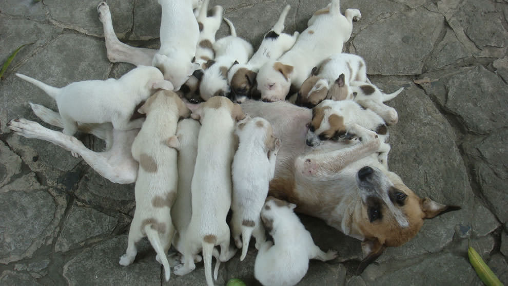 День Матери - фото из мира животных (6)