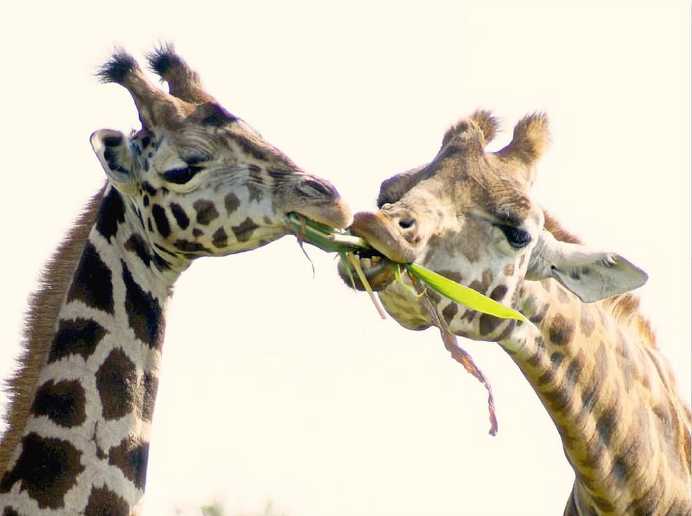 День Матери - фото из мира животных (7)
