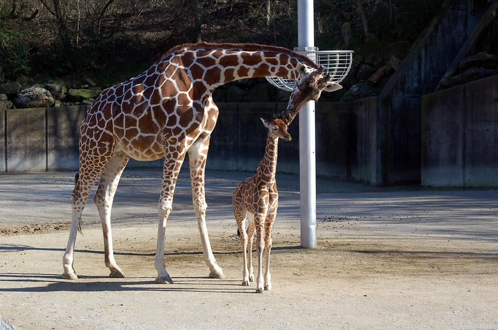День Матери - фото из мира животных (8)