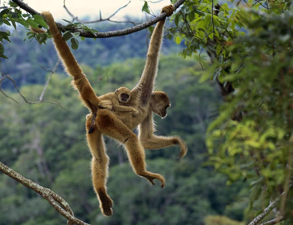 День Матери - фото из мира животных (9)