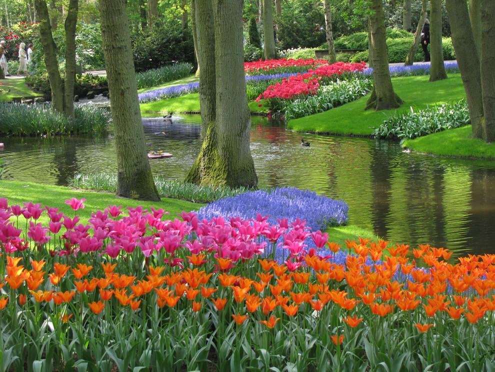 Тюльпаны - цветы весны (12)