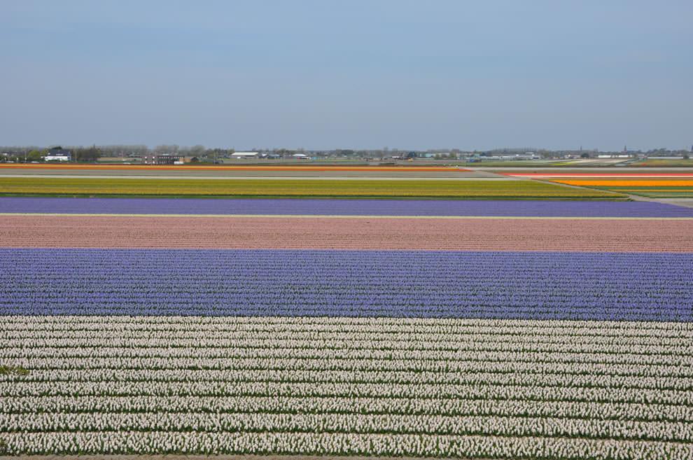 Тюльпаны - цветы весны (16)