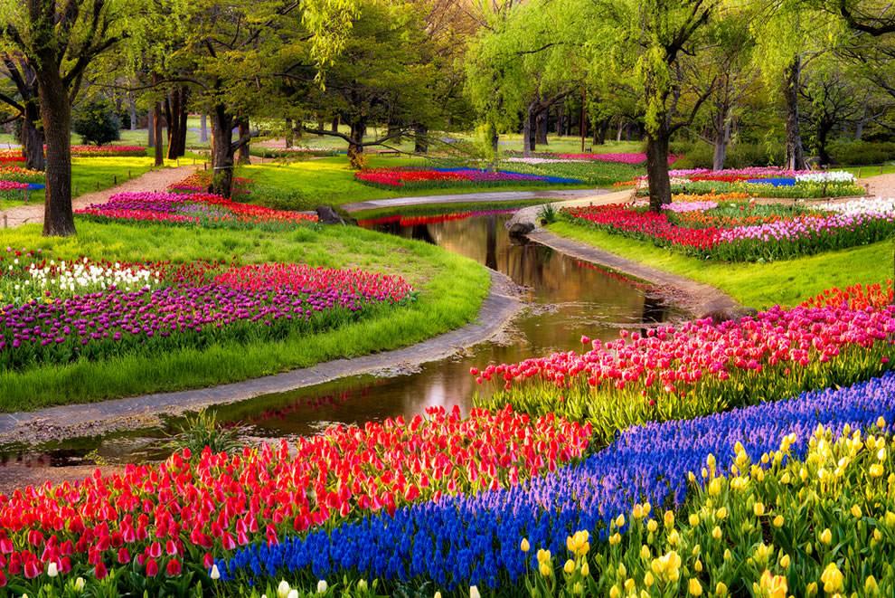 Тюльпаны - цветы весны (19)